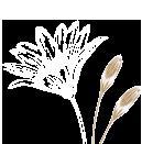 flower illust